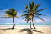 Palmeiras na praia — Fotografia Stock