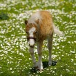 Stock Photo: Horse foal on grass with flowers