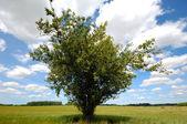 Tree on corn field — Stock Photo