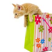 Kitten and shopping bag — Stock Photo