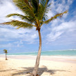 Palm on beach - Stock Photo