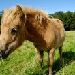 Foal is eating grass — Stock Photo