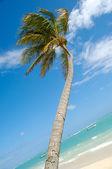 Spiaggia caraibica con palme e sabbia bianca — Foto Stock