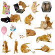 Cat collection on white background — Stock Photo