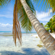 Palm hanging over beach — Stock Photo