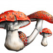 Magic mushroom — Stock Photo