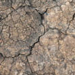 Dried mud — Stockfoto