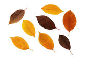 Set of autumnal leaves — Stock Photo