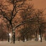 Zimą w nocy — Zdjęcie stockowe