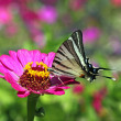 Butterfly on flower — Stock Photo #9542301