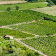 Vineyard in France — Stock Photo #10071859