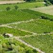 Vineyard in France — Stock Photo #10071859