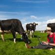 Young farmer with laptop in field with cows — Stock Photo