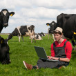 Young farmer with laptop in field with cows - Stock Photo