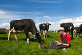 Mladý farmář s notebookem v poli s krávy — Stock fotografie