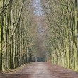 Long lane in forest - Stock Photo