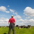 Typical Dutch landscape with farmer and cows — Stock Photo #10560577
