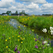 Dutch landscape with ditch — Stock Photo #10560835