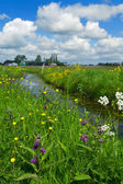 Dutch landscape with ditch — Stock Photo