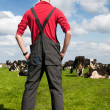 Typical Dutch landscape with farmer and cows — Stock Photo #10663068