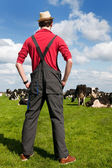 Typical Dutch landscape with farmer and cows — Stock Photo