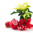 Red Poinsettia — Stock Photo #8050744
