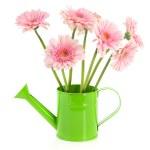 çiçekli yeşil sulama olabilir — Stok fotoğraf #8318993
