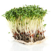 Fresh garden cress — Stock Photo