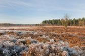Heidekraut Landschaft im winter — Stockfoto