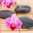 Stock Photo: Tropical pink orchid in wellness setting