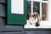 Calico cat in Dutch window — Stok fotoğraf