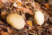White mushrooms in forest — Stockfoto