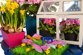 Gardening in spring — Stock Photo