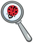 Magnifying Glass With Ladybug — Stock Photo