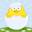 Yellow Easter Chick In A Shell On A Hill — Stock Photo #9575078
