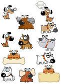 Diferentes raças de cão. coleção — Foto Stock