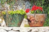 Flores en contenedores oxidados, vintage — Foto de Stock