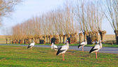 Five storks — Stock Photo