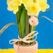 Daffodils — Stock Photo #9179664