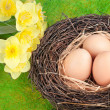 Eggs — Stock Photo #9179710