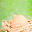 Chicken egg - Stock Photo
