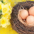 The eggs — Stock Photo