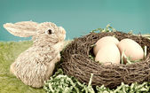 Rabbit and egg — Stock Photo