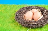 The eggs — Stock Photo
