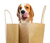 Licking lips dog . — Stock Photo