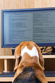 Dog sitting in front of the computer. — Stock Photo