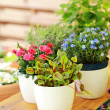 Flower pots — Stockfoto