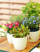 Flower pots — Foto Stock