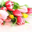 Spring flowers - 
