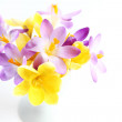 Spring flowers on white background — Stock Photo